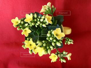 花の写真・画像素材[446428]