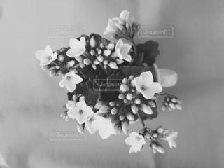 花の写真・画像素材[446429]