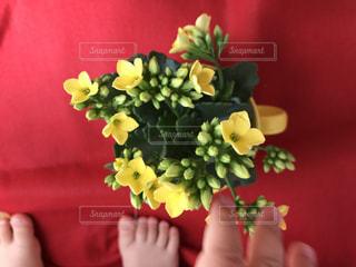 花の写真・画像素材[446433]