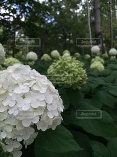花の写真・画像素材[444728]