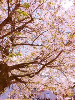 春の写真・画像素材[445927]