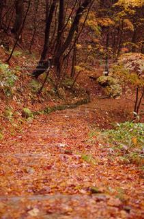 秋の写真・画像素材[445471]