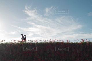 お散歩彼岸花の写真・画像素材[1790655]