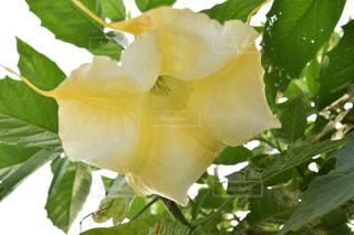花の写真・画像素材[596208]