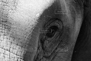 No.445746 動物