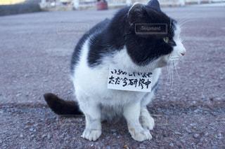 猫の写真・画像素材[770552]