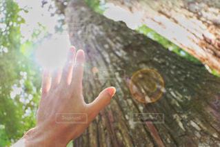 木の手 - No.770553