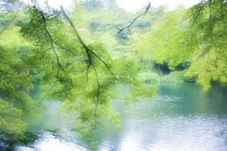 池と木々 - No.770558