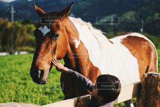 馬とふれあいの写真・画像素材[1255203]