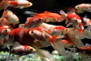 水中の魚のグループの写真・画像素材[1535468]