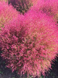 花の写真・画像素材[446404]