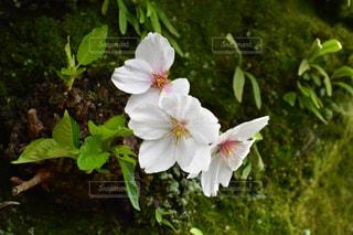 春の写真・画像素材[446180]