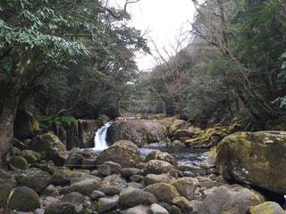 自然の写真・画像素材[446910]