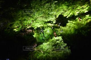 自然の写真・画像素材[459107]