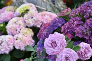 花の写真・画像素材[522876]