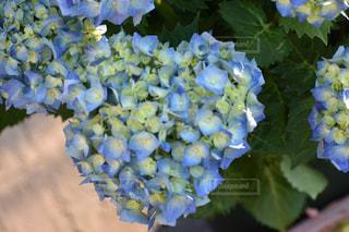 花の写真・画像素材[522879]