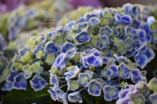 花の写真・画像素材[522887]