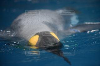 動物の写真・画像素材[522895]