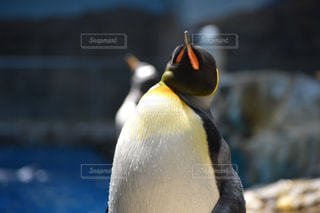 動物の写真・画像素材[522898]