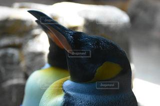 動物の写真・画像素材[522899]
