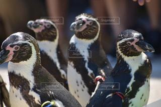 動物の写真・画像素材[522905]