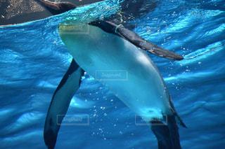 動物の写真・画像素材[522908]