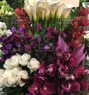 花の写真・画像素材[446249]