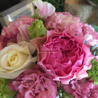 花の写真・画像素材[446250]