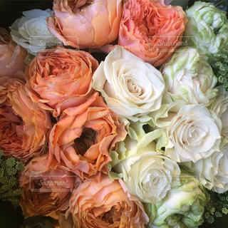 花の写真・画像素材[446251]