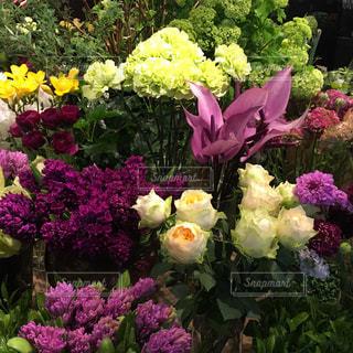 花の写真・画像素材[446252]