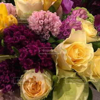 花の写真・画像素材[446253]