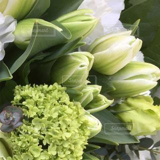 花の写真・画像素材[446254]