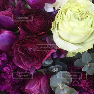 花の写真・画像素材[446256]