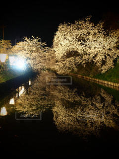 No.449568 桜