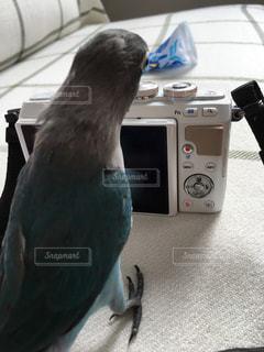 カメラ - No.451517