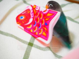 動物の写真・画像素材[453041]