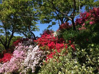 花の写真・画像素材[513769]