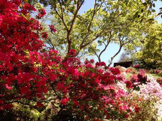 花の写真・画像素材[513771]