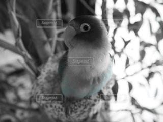 動物の写真・画像素材[541368]