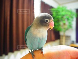 鳥 - No.621870