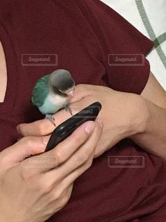 No.621871 鳥