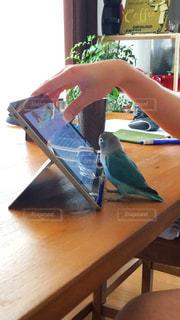 鳥の写真・画像素材[630152]
