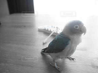 鳥 - No.658408
