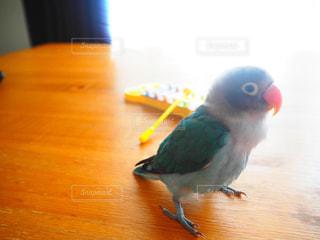 鳥 - No.658409