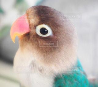 鳥 - No.664256