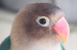 鳥 - No.664258