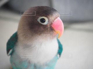 鳥の写真・画像素材[664259]