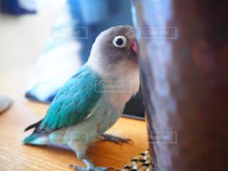 鳥の写真・画像素材[664260]