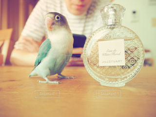 テーブルに座っている小さな鳥 - No.716451