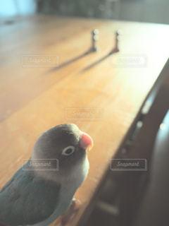近くに鳥のアップ - No.716453